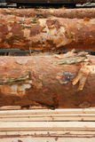 Logs and planks Stock Images