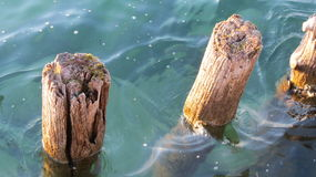 Logs. Protecting a harbor in Lake Constance Stock Images