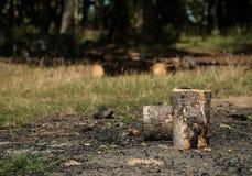 Logs queimados Fotografia de Stock
