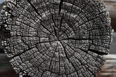 Logs rachados velhos do corte com anéis anuais Imagens de Stock Royalty Free
