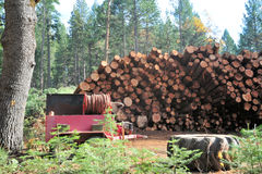Logs Ready For The Milll Stock Image