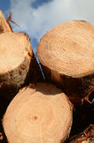 Logs ready to go Stock Photography
