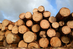 Logs ready to go Stock Photos