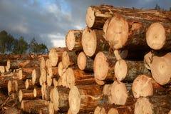 Logs ready to go Stock Photos