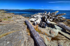 Logs resting on a coastal beach. Logs are resting on a west coast beach on a provincial park Royalty Free Stock Photography