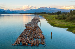 Logs on River and Distant Mountains Royalty Free Stock Photo