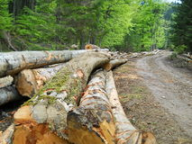 Logs on the road Royalty Free Stock Photo