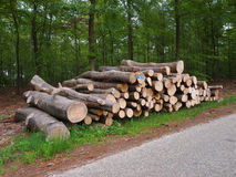 Logs on roadside. Newly felled timber on the side of the road Royalty Free Stock Photography