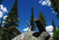 Logs on rock boulder. Trees and intense blue sky, Grand Teton mountains, Wyoming Stock Photography