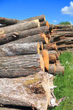 Logs - round assortment of forest product Stock Image