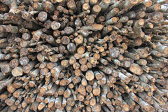 Logs. Rubber tree use to be a fuel for the factory Stock Image