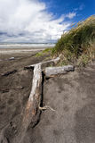 Logs on the sand by the grass. Royalty Free Stock Images