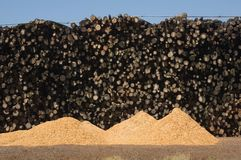 Logs at a saw mill and dust Royalty Free Stock Image