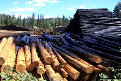 Logs at a Sawmill. Stacked logs being sprayed down with water at a sawmill Stock Photography