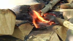 Logs secos ardentes Queimadura no fogo, close-up dos logs filme