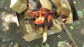 Logs secos ardentes Queimadura no fogo, close-up dos logs vídeos de arquivo