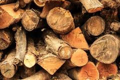 Logs secos da teca Imagem de Stock Royalty Free