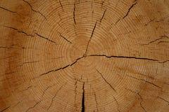 Logs secos do pinho com teste padrão natural na madeira com quebras Imagens de Stock Royalty Free