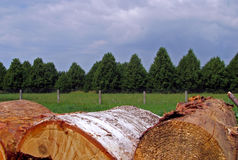 Logs on the side of the field. Buch of logs stacked on the side of the field, near some trees. Taken in Latvia, near Ventspils Stock Photo