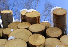 Logs in the sky. A pile of snowed logs viewed against the blue winter sky and some birch trees above Stock Photo