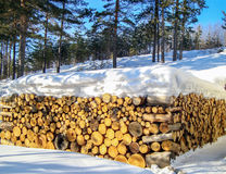 Logs snow forest Stock Photography