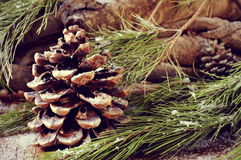Logs and snowy pine tree branches and cones Royalty Free Stock Photos