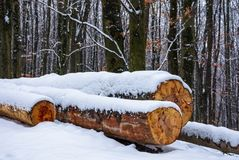 Logs on the snowy slope in forest. Lovely nature scenery in winter Stock Photos