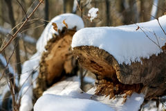 Logs speak Royalty Free Stock Photography