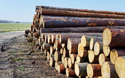Logs in a stack Royalty Free Stock Photo