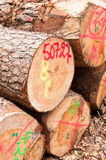 Logs stack Royalty Free Stock Photos
