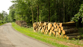Logs. Stack of tree logs by side of road Royalty Free Stock Photo