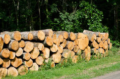 Logs. Stack of tree logs by side of road Stock Image