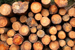 Logs stacked. A logs neatly stacked near the forest path Stock Photo