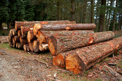Logs stacked. A logs neatly stacked near the forest path Royalty Free Stock Image