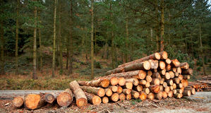 Logs stacked. A logs neatly stacked near the forest path Stock Image