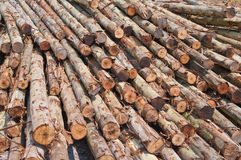 Logs stacked. Await cutting and finishing Royalty Free Stock Images