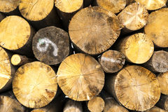 Logs. Stacked composite logs without bark Royalty Free Stock Photo
