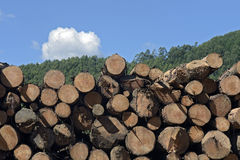Logs stacked with cross view under blue sky. MONTE VERDE, MG, BRAZIL - APRIL 21, 2016 - Logs stacked for processing in sawmill stock photos