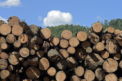 Logs stacked with cross view under blue sky Royalty Free Stock Photo