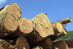 Logs stacked with cross view under blue sky Stock Photos