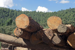 Logs stacked with cross view under blue sky. MONTE VERDE, MG, BRAZIL - Logs stacked for processing in sawmill royalty free stock photo