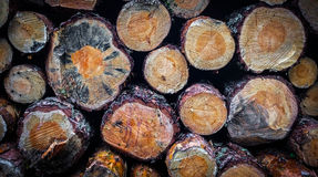Logs. Stacked logs in the forest Royalty Free Stock Image