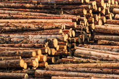 Logs stacked Royalty Free Stock Photography