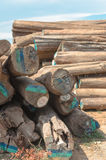 Logs stacked at a sawmill Royalty Free Stock Image