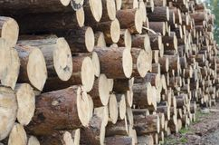 The logs are stacked on top of each other in a large pile stock images
