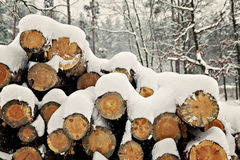 logs stacked under the snow in the forest Stock Images