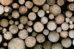Logs stacked up in a forest Stock Photo