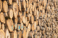 Logs stacked and waiting to become.... Stock Photos