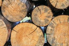 Logs stacked in a woodpile closeup Royalty Free Stock Images