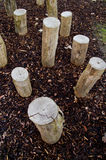 Logs standing in playground Stock Photo